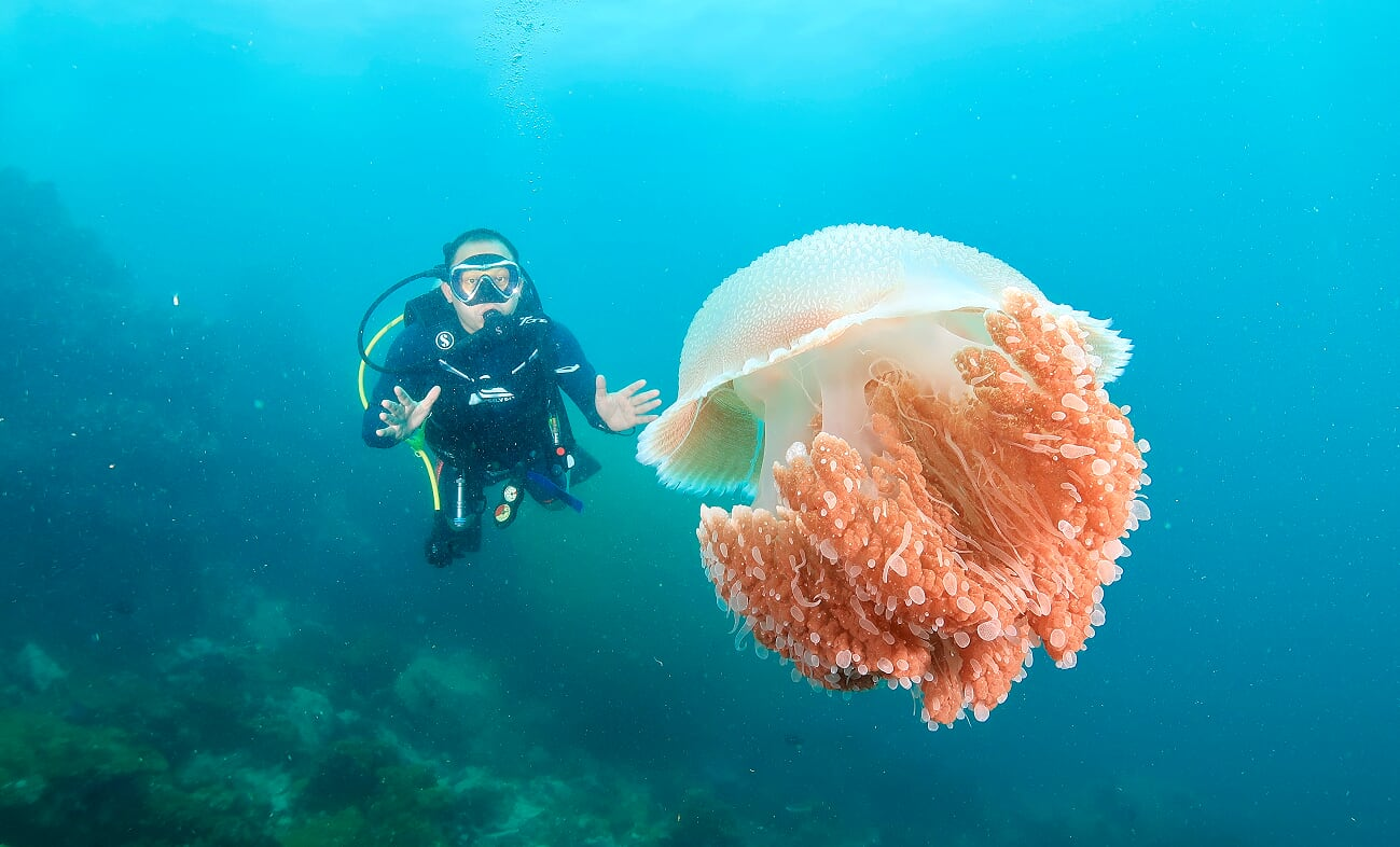 Half Day Diving Bangtao
