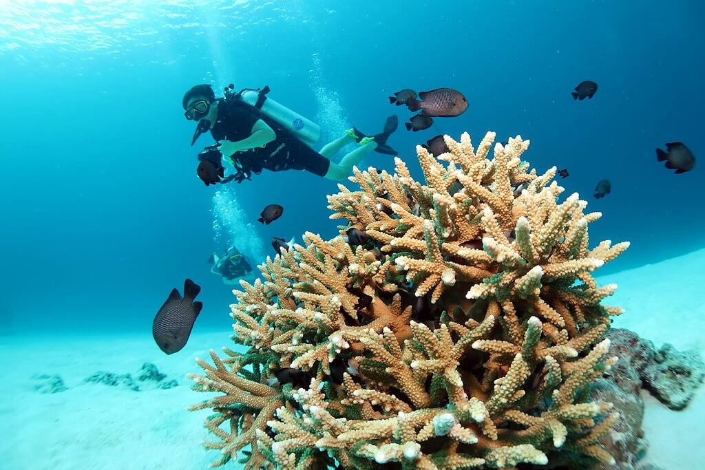 Diving Phuket